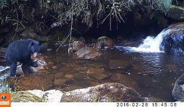 Заботливая мамаша: медведица учит медвежонка перебираться через реку