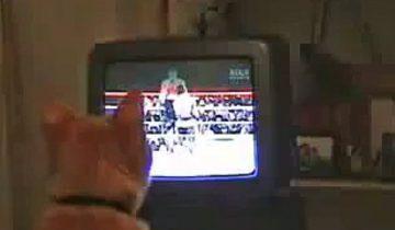 Кот смотрит бокс и активно болеет за спортсменов: веселое видео