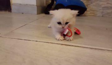 Котенок охраняет свою пустышку