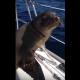 Встреча в открытом море: детеныш морского льва покорил интернет