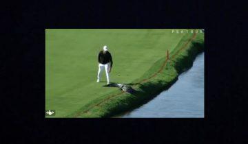 Крокодил разгулялся по полю для гольфа: игрок поставил его на место