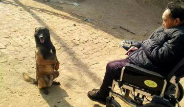 Китаец выдрессировал своих собак: посмотрите, как они ходят по канату!