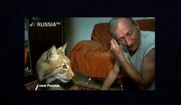 Домашняя рысь Кнопка: может ли хищник подружиться с человеком?