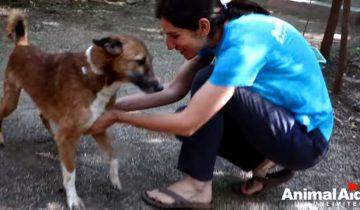 Любовь способна на чудеса: восстановление больного пса с парализованными лапами