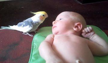 Попугай распевает для младенца нежную песенку