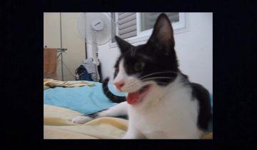 Кот, который считает себя собакой, собрал 12 миллионов просмотров