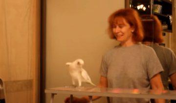 Попугай танцует ламбаду: какой талант!