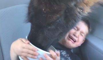 Беспардонная лама довела ребенка до слез