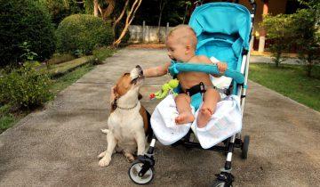 Самая веселая прогулка — это прогулка с любимой собакой
