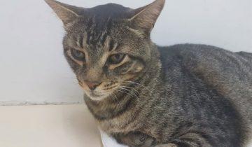 11 лет парень считал этого кота без вести пропавшим
