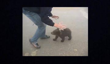 Медведь атакует! Самое милое нападение, какое только можно представить