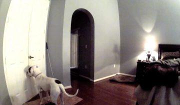 Хозяйка оставила камеру, чтобы наблюдать за своей собакой
