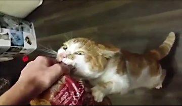 Кот Борис — любитель булок, стал героем интернета