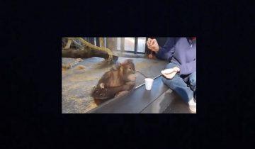 Реакция орангутана на фокус поразила публику: 1,7 млн просмотров