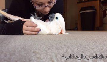 Попугай учится снова доверять людям после жестокого обращения