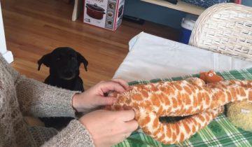 Собака терпеливо ждет, пока отремонтируют ее игрушку