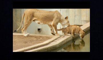 Зрители замерли в шоке: что задумала эта львица?!