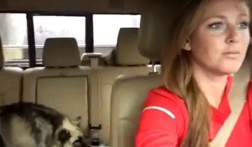 Собака поет вместе с хозяйкой хит Queen