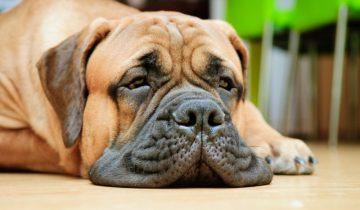 Житель США оставил дома собаку со включенной камерой GoPro