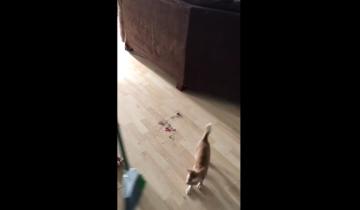 Что бывает, когда котенок помогает с уборкой