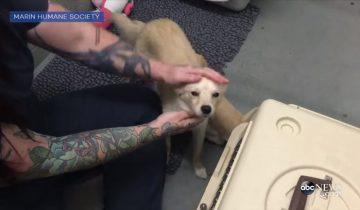 Воссоединение после разлуки: мама-собака радуется встрече со щенками