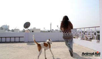 На грани жизни и смерти: неимоверное спасение собаки
