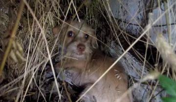 Спасатели узнали о бездомной собачке в кустах и поспешили на помощь…