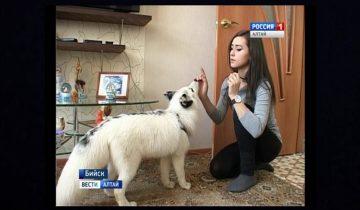 Белый лис стал любимцем Бийска и звездой интернета