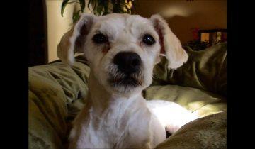 Эта собака чудом избежала усыпления. Теперь у нее есть новый дом и любящая хозяйка!