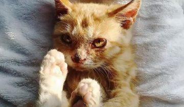 Котенок до того проголодался, что ел даже грязь: его спасло чудо