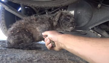 Когда волонтеры приехали за этой собакой, еще не знали, что она кормящая мама