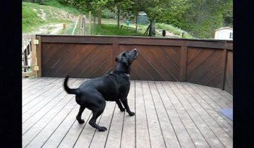 Когда сбываются собачьи мечты: псу подарили 300 теннисных мячей!