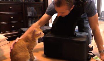 10 причин любить домашнего кота
