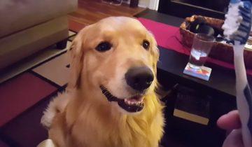 Самый ответственный пес в мире — он безропотно чистит зубы