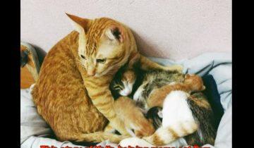 Папаша-кот поддержал новоиспеченную мамочку