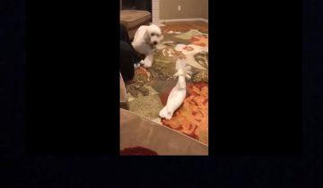 Собака и попугай развлекаются