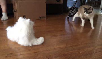 Реакция питомцев на кота-робота