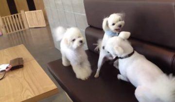 Ответственная собака: развела драку щенков и отчитала драчунов