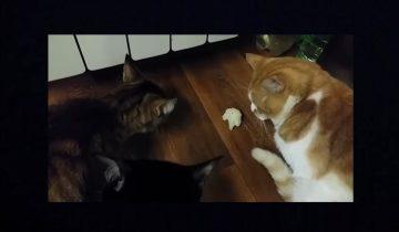 Боря и брокколи: кота потянуло на витамины