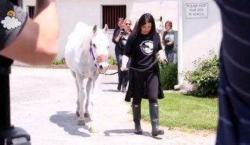 Сложно поверить, через ЧТО пришлось пройти этой красавице-лошади