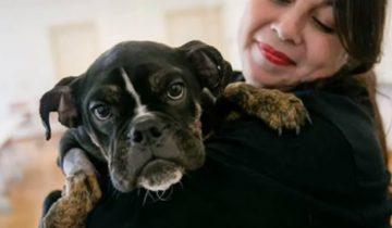 Глядя на эту красивую собаку, сложно поверить, ЧТО она испытала в прошлом