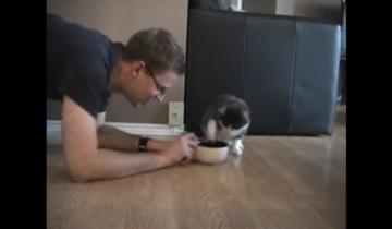 Хозяин забирает еду у кота. Что будет дальше?