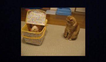 Кошка в шоке: ей подкинули котенка