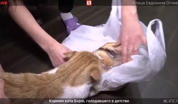 Новые приключения кота Бориса: нападение на булку при журналистах
