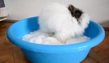 Крольчонок впервые видит снег: посмотрите на его реакцию