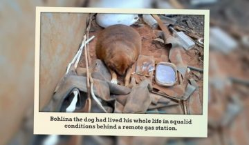 Эта бездомная собака весила больше 30 килограмм!