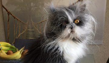Лохматый кот из Канады — новая звезда интернета