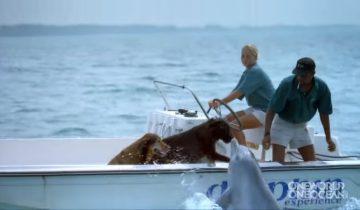 Целующийся дельфин собрал 3,6 млн просмотров