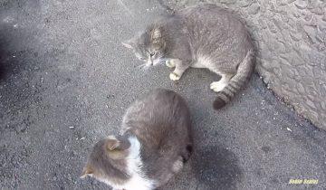 Кот, который желает есть в одиночестве, стал звездой интернета