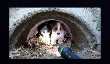 Он пообещал погибшей собаке, что спасет ее щенков…